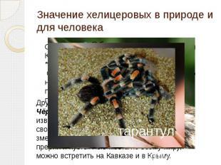 Значение хелицеровых в природе и для человека Самым ядовитым пауком в мире, по в