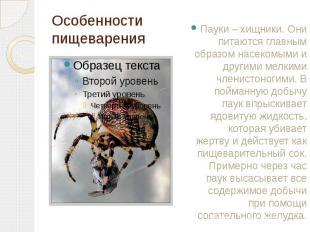 Особенности пищеварения Пауки – хищники. Они питаются главным образом насекомыми
