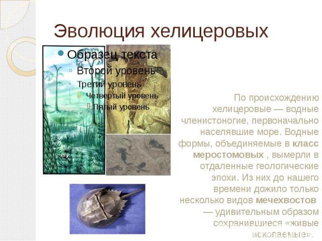 Эволюция хелицеровых По происхождению хелицеровые — водные членистоногие, первоначально населявшие море. Водные формы, объединяемые вкласс меростомовых, вымерли в отдаленные геологические эпохи. Из них до нашего времени дожило только несколько вид…