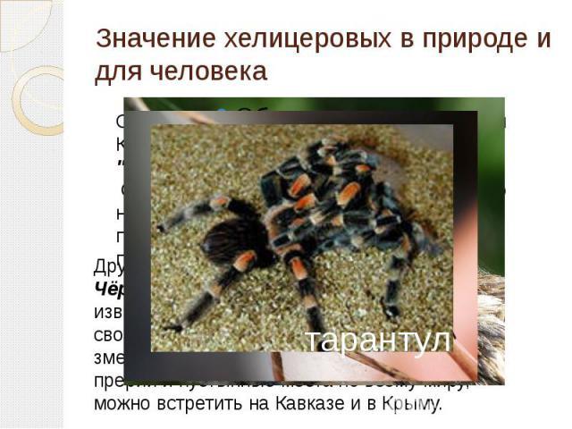 Значение хелицеровых в природе и для человека Самым ядовитым пауком в мире, по версии Книги рекордов Гиннеса, считается
