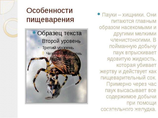 Особенности пищеварения Пауки – хищники. Они питаются главным образом насекомыми и другими мелкими членистоногими. В пойманную добычу паук впрыскивает ядовитую жидкость, которая убивает жертву и действует как пищеварительный сок. Примерно через час …