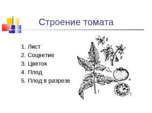 1. Лист2. Соцветие3. Цветок4. Плод5. Плод в разрезе