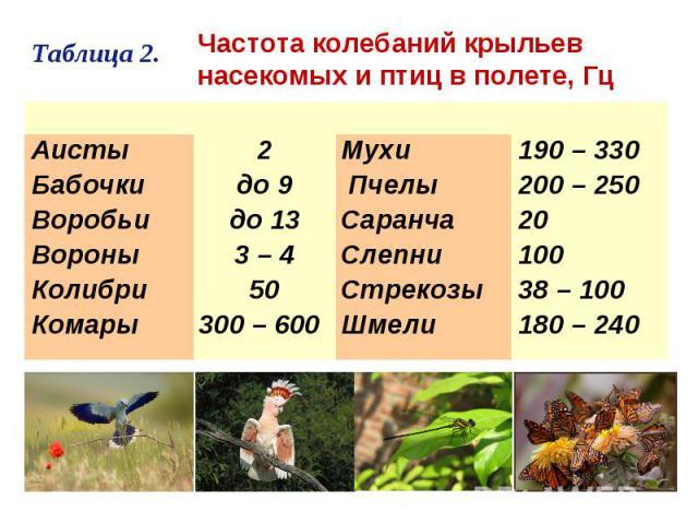 Частота колебаний крыльевнасекомых и птиц в полете, Гц