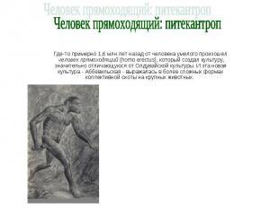 Человек прямоходящий: питекантроп Где-то примерно 1,6 млн лет назад от человека