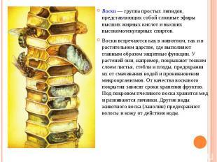 Воски — группа простых липидов, представляющих собой сложные эфиры высших жирных