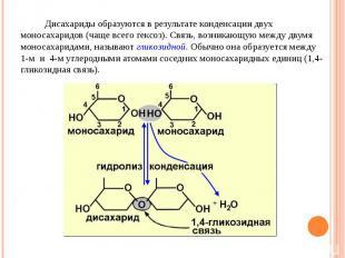 Дисахариды образуются в результате конденсации двух моносахаридов (чаще всего ге