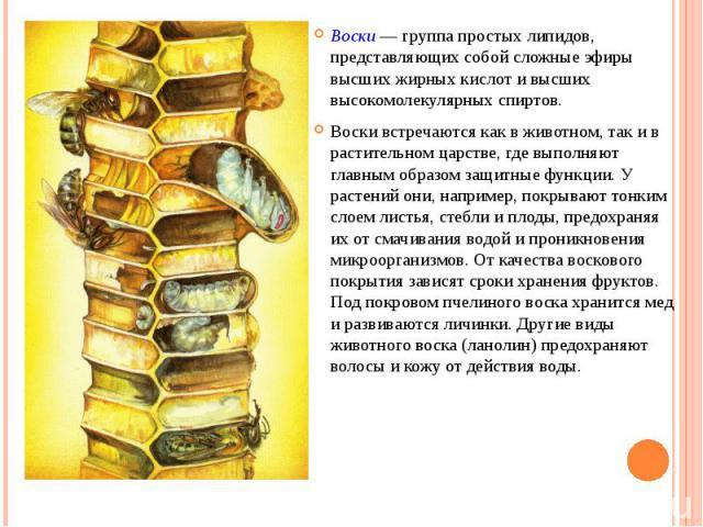 Воски — группа простых липидов, представляющих собой сложные эфиры высших жирных кислот и высших высокомолекулярных спиртов. Воски встречаются как в животном, так и в растительном царстве, где выполняют главным образом защитные функции. У растений о…