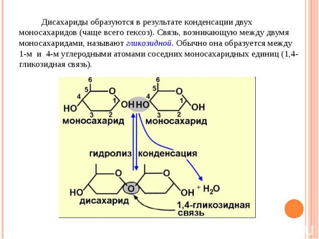 Дисахариды образуются в результате конденсации двух моносахаридов (чаще всего гексоз). Связь, возникающую между двумя моносахаридами, называют гликозидной. Обычно она образуется между 1-м и 4-м углеродными атомами соседних моносахаридных единиц (1,4…
