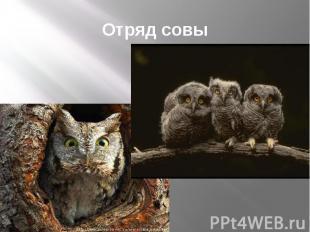 Отряд совы