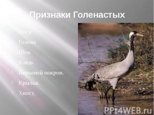 Признаки ГоленастыхНогиГоловаШея.Клюв.Перьевой покров.Крылья.Хвост.