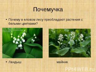 ПочемучкаПочему в еловом лесу преобладают растения с белыми цветками?Ландыш майн
