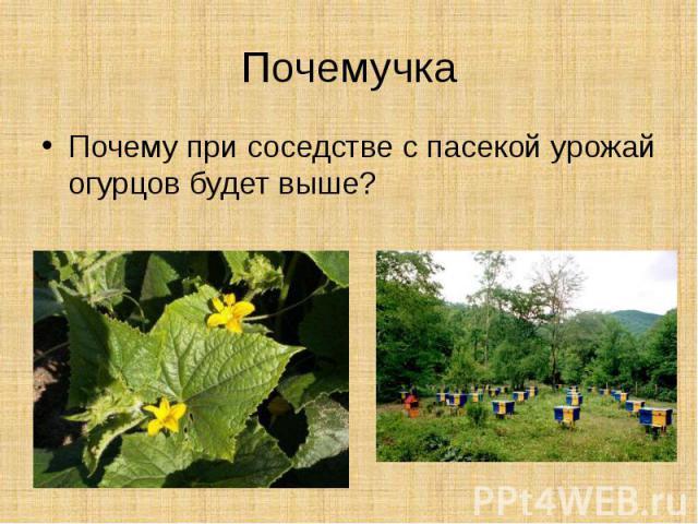 ПочемучкаПочему при соседстве с пасекой урожай огурцов будет выше?
