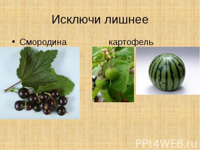 Исключи лишнееСмородина картофель арбуз