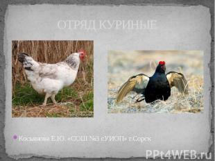 ОТРЯД КУРИНЫЕКосьянова Е.Ю. «СОШ №3 сУИОП» г.Сорск