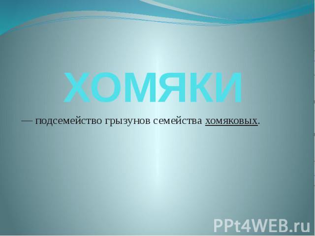 Хомяки - подсемействогрызуновсемействахомяковых