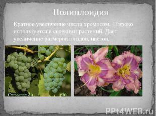 Кратное увеличение числа хромосом. Широко используется в селекции растений. Дает