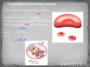 Серповидноклеточная анемия В состав цепи гемоглобина входит 146 аминокислотных о