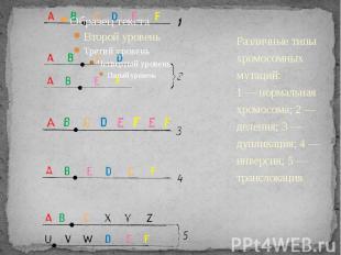 Различные типы хромосомных мутаций:1 — нормальная хромосома; 2 — деления; 3 — ду