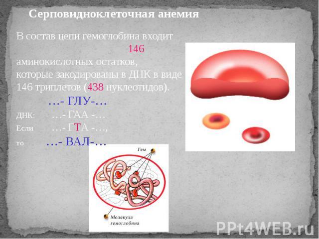 Серповидноклеточная анемия В состав цепи гемоглобина входит 146 аминокислотных остатков, которые закодированы в ДНК в виде 146 триплетов (438 нуклеотидов). …- ГЛУ-…ДНК: …- ГАА -…Если …- ГТА -…, то …- ВАЛ-…