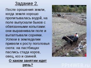 После орошения земли, когда земля хорошо пропитывалась водой, на поле выпускали