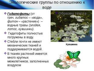 Экологические группы по отношению к воде Гидатофиты (от греч.гидатос– «вода»,