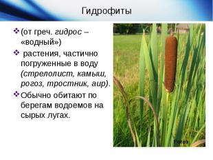 Гидрофиты(от греч.гидрос– «водный») растения, частично погруже