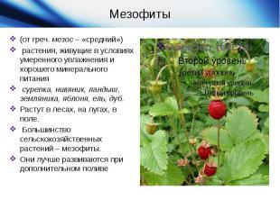 (от греч.мезос– «средний»)  растения, живущие в условиях умеренного увлажнени