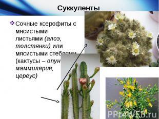 Суккуленты Сочные ксерофиты с мясистыми листьями (алоэ, толстянки) или мясистыми