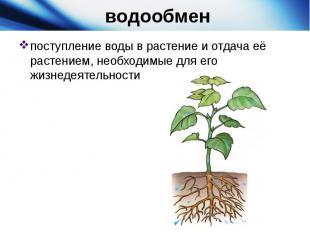 водообменпоступление воды в растение и отдача её растением, необходимые дл