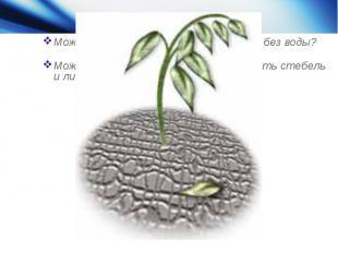 Может быть корни могут обходиться без воды?Может достаточно просто опрыскивать с
