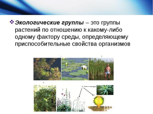 Экологические группы– это группы растений по отношению к какому-либо одному фактору среды, определяющему приспособительные свойства организмов
