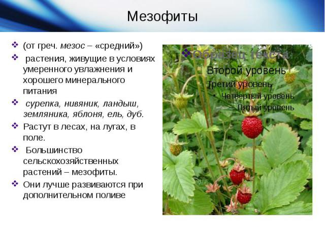 (от греч.мезос– «средний»)  растения, живущие в условиях умеренного увлажнения и хорошего минерального питания сурепка, нивяник, ландыш, земляника, яблоня, ель, дуб. Растут в лесах, на лугах, в поле. Большинство сельскохозяйственных растений– ме…