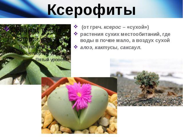 Ксерофиты (от греч.ксерос– «сухой») растения сухих местообитаний, где воды в почве мало, а воздух сухойалоэ, кактусы, саксаул.