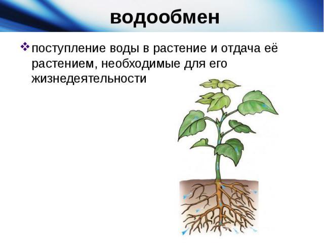 водообменпоступление воды в растение и отдача её растением, необходимые для его жизнедеятельности