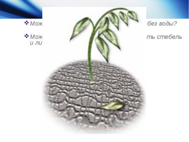 Может быть корни могут обходиться без воды?Может достаточно просто опрыскивать стебель и листья растения водой?