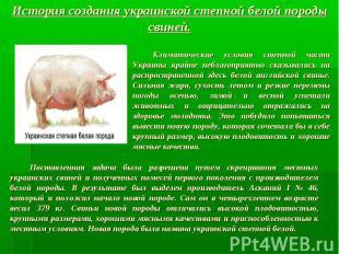 История создания украинской степной белой породы свиней. Климатические условия с