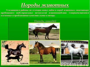 Породы животных Усиливаются работы по селекции новых видов и пород животных, отв