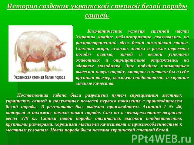История создания украинской степной белой породы свиней. Климатические условия степной части Украины крайне неблагоприятно сказывались на распространенной здесь белой английской свинье. Сильная жара, сухость летом и резкие перемены погоды осенью, зи…