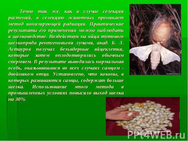 Точно так же, как в случае селекции растений, в селекцию животных проникает метод ионизирующей радиации. Практические результаты его применения можно наблюдать в шелководстве. Воздействуя на яйца тутового шелкопряда рентгеновыми лучами, акад. Б. Л. …