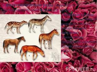 2.филогенетические ряды (ряды видов, последовательно заменяющие друг друга). Эво