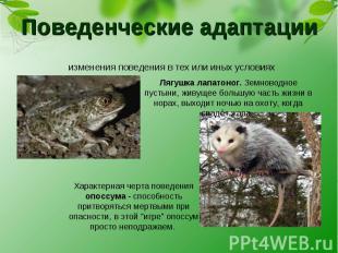 Поведенческие адаптации изменения поведения в тех или иных условиях Лягушка лапа