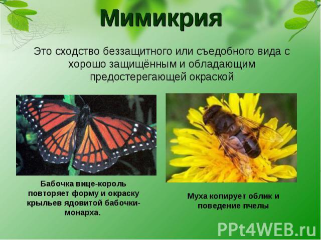 Мимикрия Это сходство беззащитного или съедобного вида с хорошо защищённым и обладающим предостерегающей окраской Бабочка вице-король повторяет форму и окраску крыльев ядовитой бабочки-монарха. Муха копирует облик и поведение пчелы