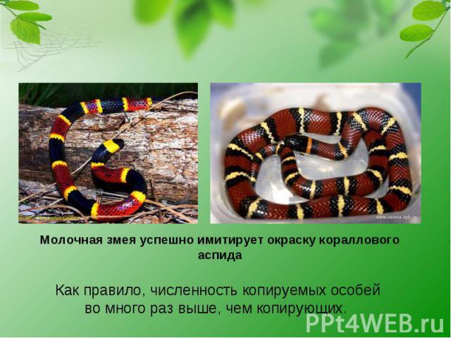 Молочная змея успешно имитирует окраску кораллового аспида Как правило, численность копируемых особей вомного раз выше, чем копирующих.