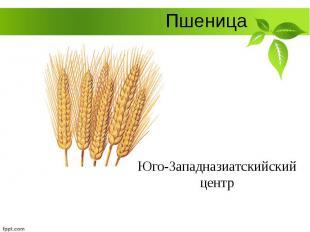 Пшеница Юго-Западназиатскийский центр
