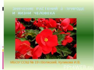 Значение растений в природе и в жизни человека МБОУ СОШ № 19 г.Волжский, Куликов