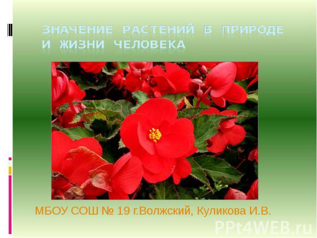 Значение растений в природе и в жизни человека МБОУ СОШ № 19 г.Волжский, Куликова И.В.