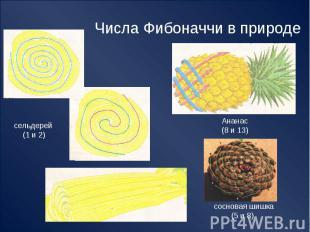 Числа Фибоначчи в природе сельдерей (1 и 2) Ананас(8 и 13) сосновая шишка (5 и 8