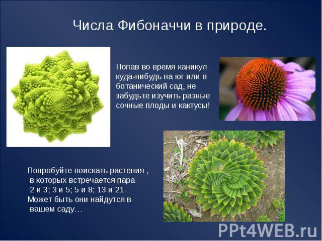Числа Фибоначчи в природе. Попав во время каникул куда-нибудь на юг или в ботанический сад, незабудьте изучить разные сочные плоды и кактусы! Попробуйте поискать растения , в которых встречается пара 2 и 3; 3 и 5; 5 и 8; 13 и 21.Может быть они найду…
