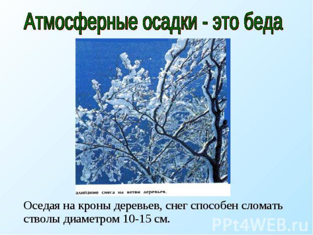 Атмосферные осадки - это беда Оседая на кроны деревьев, снег способен сломать стволы диаметром 10-15 см.