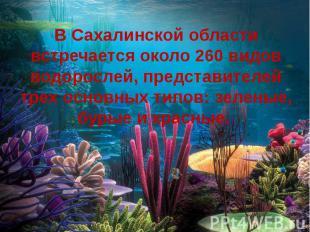 В Сахалинской области встречается около 260 видов водорослей, представителей тре